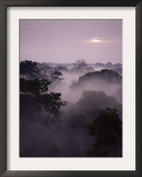 Dawn Over Canopy of Tai Forest, Cote D'Ivoire, West Africa Posters by Michael W. Richards