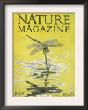 Nature Magazine - View of a Dragonfly over a Pond, c.1926 Posters