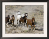 Herd of Wild Horses, Cantering Across Sagebrush-Steppe, Adobe Town, Wyoming, USA Poster by Carol Walker