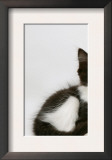 Black Dutch Rabbit with Black-And-White Kitten Prints by Jane Burton