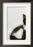 Black Dutch Rabbit with Black-And-White Kitten Prints by Jane Burton