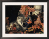 Grey Wolf Portrait with Autumn Leaves, USA Prints by Lynn M. Stone