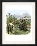 African American Slaves Harvesting Cane on a Sugar Plantation Prints