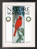 Nature Magazine - View of a Cardinal Perched on a Pine Branch, c.1927 Prints