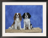 Dogs, Two Cavalier King Charles Spaniels on Basket Prints by Petra Wegner