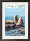 Cambria, California - Sea Lions, c.2009 Prints by  Lantern Press
