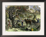 Picking Apples, a Farm Scene Near Pride's Bridge, Maine, c.1800 Posters