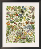 Tropical and Exotic Flowers, Including Orchid, Anthurium, Gloxinia, Trillium Prints