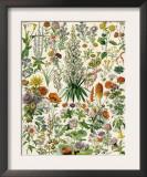 Perennial Garden Flowers, Aster, Daisy, Bleeding Heart, Geranium, Primrose, Phlox Posters