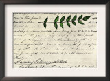 William Clark's Sketch of an Evergreen Shrub Leaf in the Lewis and Clark Expedition Diary, c.1806 Poster