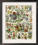 Flowering Shrubs, Including Peony, Rose, Lilac, Echinopsis, Fuschia, Laurel, Magnolia, Rhododendron Poster