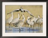 Sandhill Cranes Displaying, Bosque Del Apache National Park, NM, USA Art by Rolf Nussbaumer