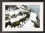 Mule Train Going to the Silver Mines of Colorado Prints