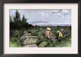 Asian Workers Curing Raisins in the Vineyards of California, c.1890 Posters