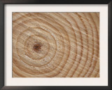 Growth Rings in Trunk of Spruce Tree, Norway Posters by Pete Cairns
