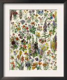 Garden Flowers, Lily, Daffodil, Tulip, Dahlia, Zinnia, Pansy, Marigold Poster