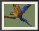 Blue and Yellow Macaw, Landing on a Perch Posters by Jane Burton