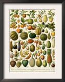 Tropical Fruits Prints