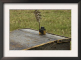 Camp Desk Withquill Pen at a Reenactment on the Yorktown Battlefield, Virginia Prints