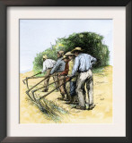 African American Field Hands Hooking Up Sugar Cane in Louisiana, c.1800 Prints