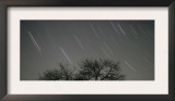 Star Trails, 20 Minutes Exposure Time, Pusztaszer, Hungary Posters by Bence Mate