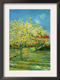 Orchard with Cypress Prints by Vincent van Gogh