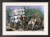 African-American Hauling Baled Cotton to Market with a Team of Mules, c.1800 Posters