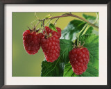 Raspberries Prints by Petra Wegner