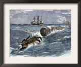 Angry Whale Chasing a Harpoon Boat Print