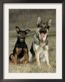 German Shepherd and Mixed Breed Dogs Prints by Petra Wegner