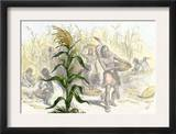 Corn, or Maize, Staple Food of the Native Americans Print