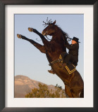 Horsewoman on Rearing Bay Azteca Stallion (Half Andalusian Half Quarter Horse) Ojai, California Prints by Carol Walker