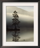 Scots Pine Tree Reflected in Lake at Dawn, Loch an Eilean, Scotland, UK Prints by Pete Cairns