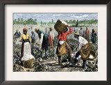 African-American Slaves Picking Cotton Posters