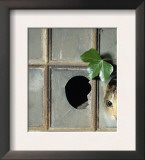 Tabby Tortoiseshell in an Ivy-Grown Window of a Deserted Victorian House Print by Jane Burton