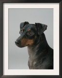 Manchester Terrier Posters by Petra Wegner
