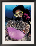 Diver with False Clown Anemonefish, in Anemone Print by Jurgen Freund