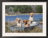 Golden Retrievers in Boat, USA Prints by Lynn M. Stone