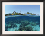 Split-Level Shot of Coral Reef and Shore, Phillippines Posters by Jurgen Freund