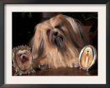 Lhasa Apso with Framed Pictures of Other Lhasa Apsos Posters by Adriano Bacchella
