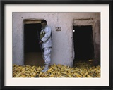 An Iraqi Army Soldier Checks a Storage Room Full of Corn Prints by  Stocktrek Images
