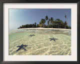 Three Seastars in Shallow Coastal Waters, Philippines, Split- Level Shot Print by Jurgen Freund