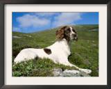 Springer Spaniel, Scotland, UK Poster by Pete Cairns