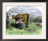 Young Woman Milking a Cow in a Pasture Poster