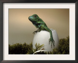 Baby Iguana Placed in a Goose Egg, (Iguana Iguana) Print by Jurgen Freund
