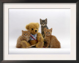 Domestic Cat, Two Ginger Kittens and a Tabby with Ginger Teddy Bear Print by Jane Burton