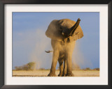 African Elephant, Shaking Dust Off, Etosha National Park, Namibia Posters by Tony Heald