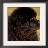 Profile Portrait of Young Black Newfoundland Prints by Adriano Bacchella