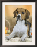 Domestic Dog, Beagle Art by Petra Wegner