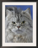Head of Persian Cat Art by Petra Wegner